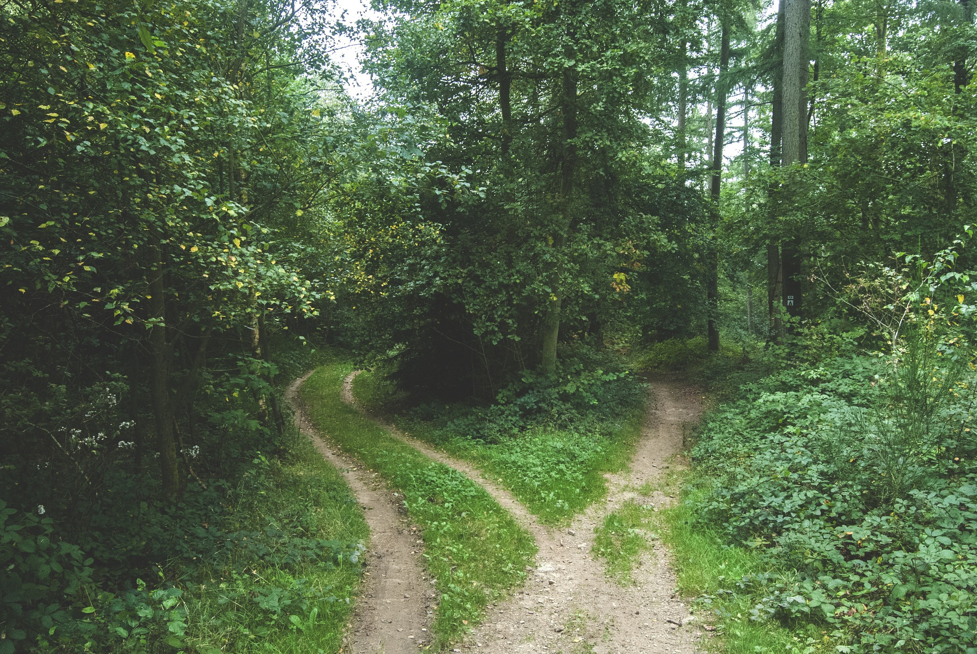Many paths to choosing an accountant